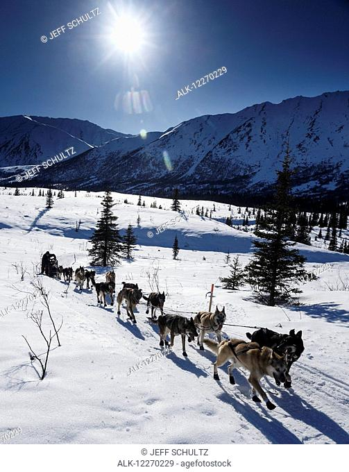 Richie Diehl on the trail between the Rainy Pass checkpoint and Rohn during Iditarod 2014