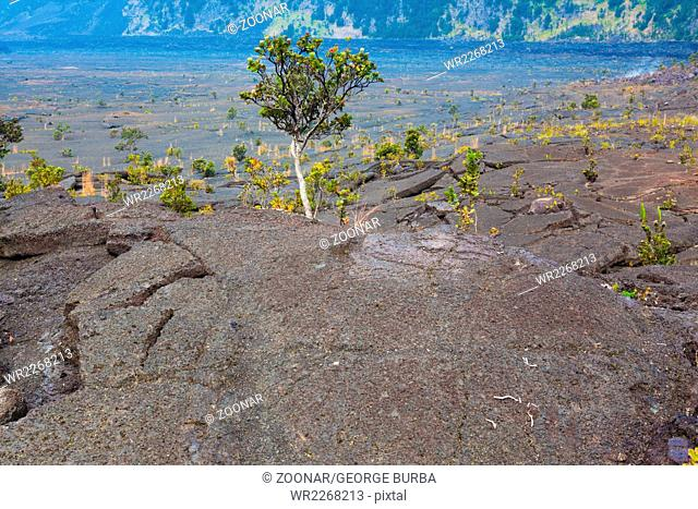 Barren bottom of Kilauea Crater with sulfur gas vents and ?ohi?a lehua plants in Hawaii Volcanoes National Park