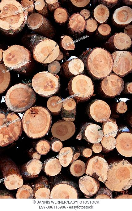 Tall stack of logs in a winter forest