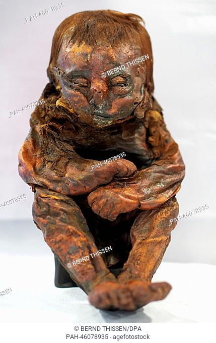 The ancient Peruvian mummy, also known as 'The Detmold Child', is on display at the state museum in Detmold, Germany, 6 February 2014
