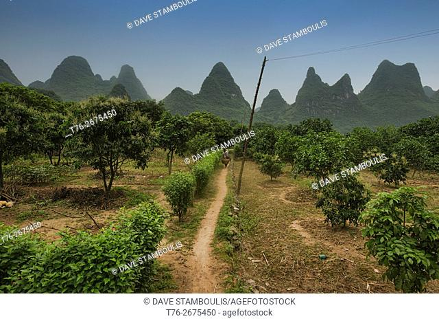 Orange groves along the famous Li River hike near Xingping, Guangxi Autonomous Region, China