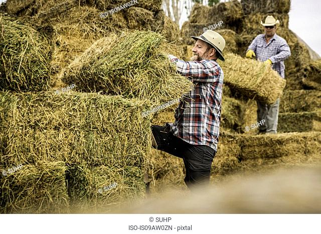 Side view of mature man moving bales of hay smiling