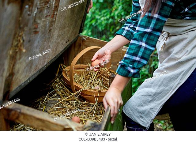 Woman collecting eggs from chicken coop
