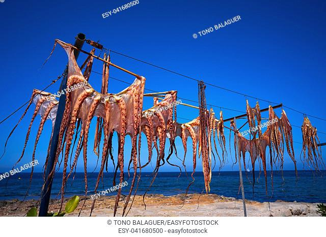 Dry Octopus dried at Mediterranean sea sun