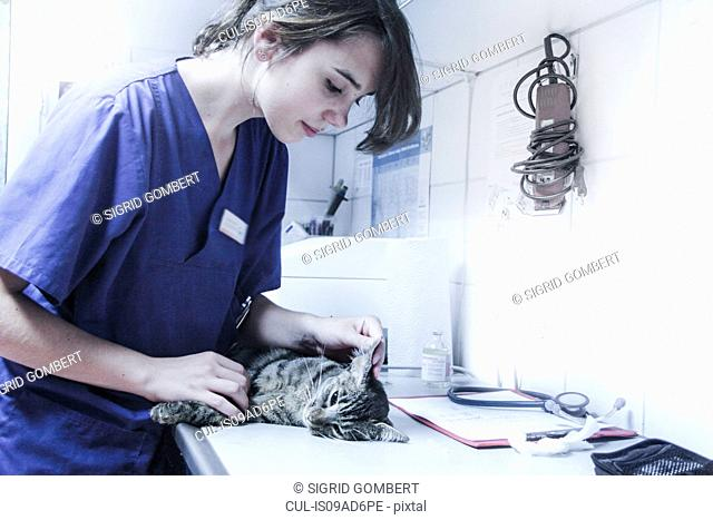 Vet looking at cat