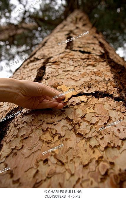 Woman touching tree bark
