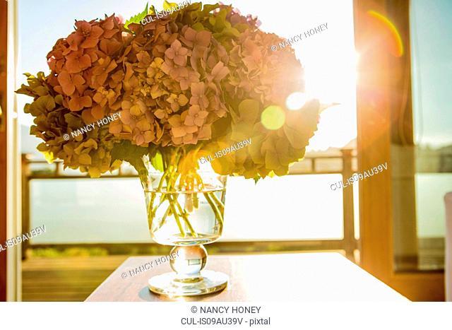 Hydrangea flowers in glass vase in front of window