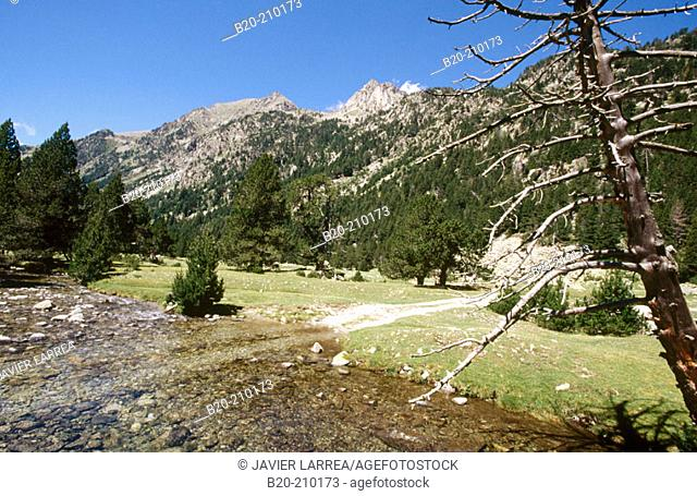 Parc Nacional d'Aigües Tortes. Lleida province. Catalonia. Spain