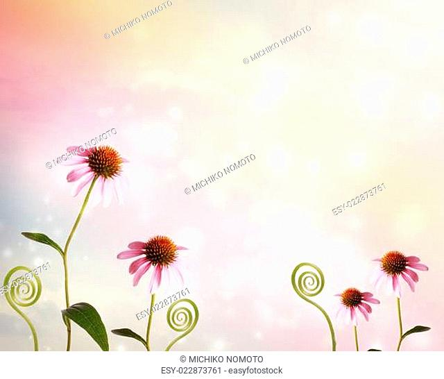Echinacea and plant tendrils