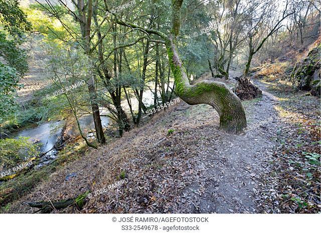 Track near River Lozoya in Patones. Madrid. Spain. Europe