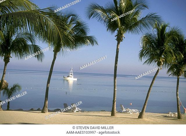 View out to sea w/ Palm Trees - Chesapeake Resort Islamorada, FL Keys, Winter, Florida beach