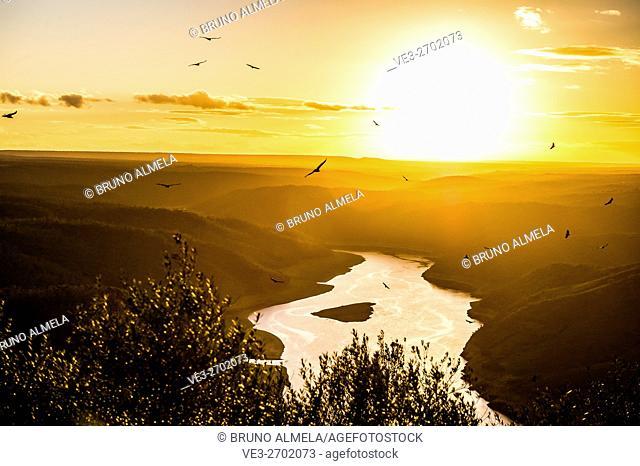"View from Monfragüe's Castle of """"José María de Oriol"""" dam and vultures flying in Tajo river, Monfragüe National Park (Cáceres Province, Extremadura Region"