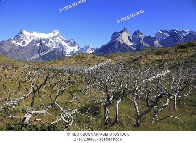 Chile, Magallanes, Torres del Paine, national park, Paine Grande, Cuernos del Paine,