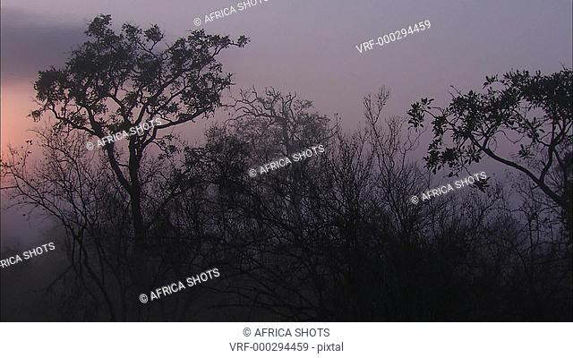 Pan of the African bushveld at sunset/sunrise. Thorn trees, silhouette, South Africa