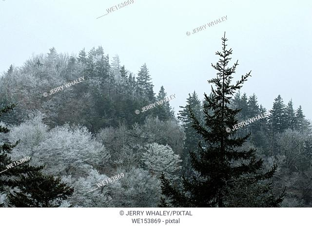Frosty Morning on Newfound Gap Road, Great Smoky Mtns National Park