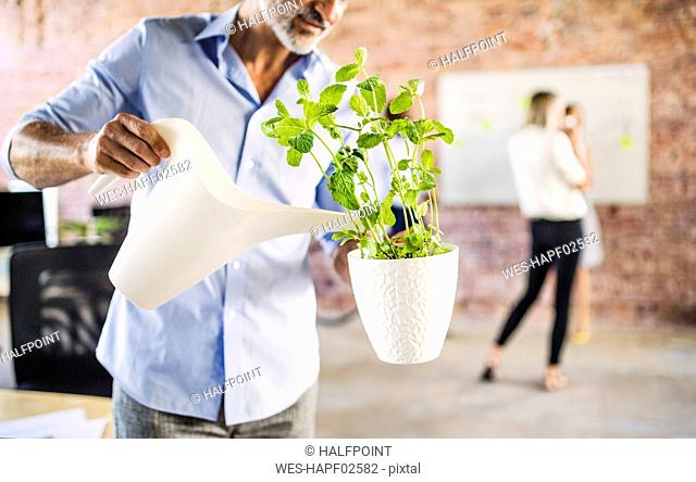 Businessman watering plant in office with colleagues in background