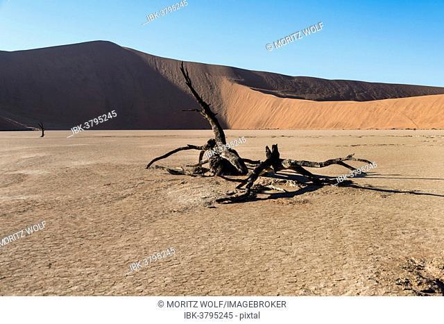 Dead tree in the salt and clay pan, Deadvlei, Sossusvlei, Namib Desert, Namibia