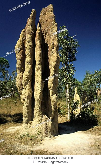 Termite mounds, Northern Territory, Australia