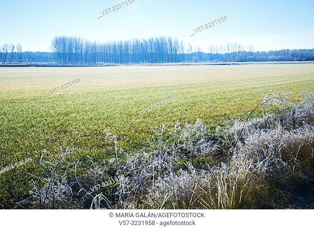 Frosty landscape. Cuellar, Segovia province, Castilla Leon, Spain