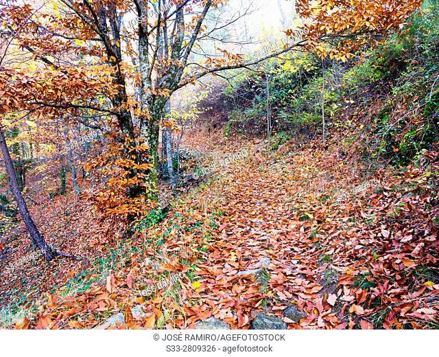 Path to Casillas in the Sierra de Gredos. Avila. Castilla Leon. Spain. Europe