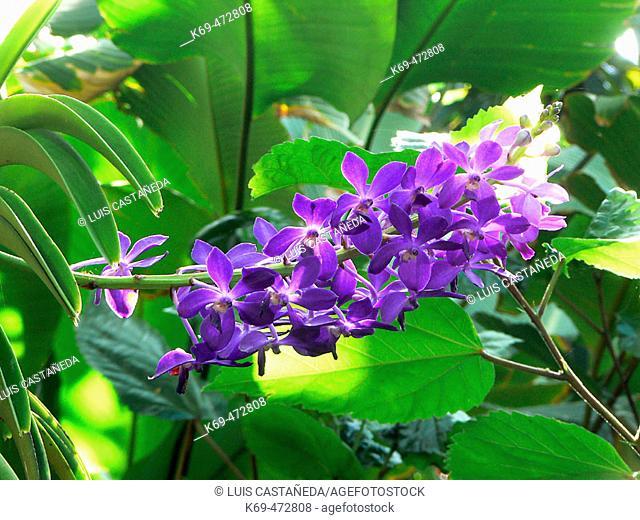Botanical Garden. Hilo. Hawaii. USA