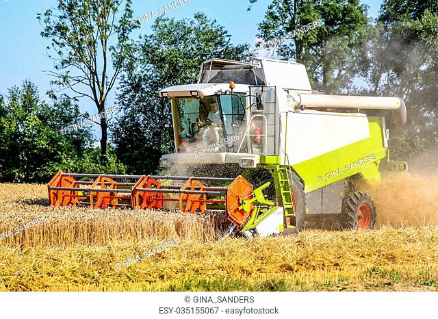 a cornfield with wheat at harvest. a combine harvester at work