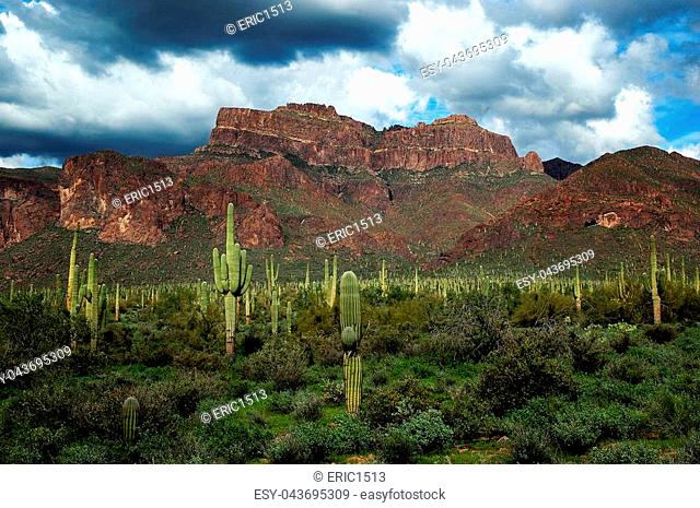 Arizona Desert Superstition Mountains wilderness with cactus cacti and clouds