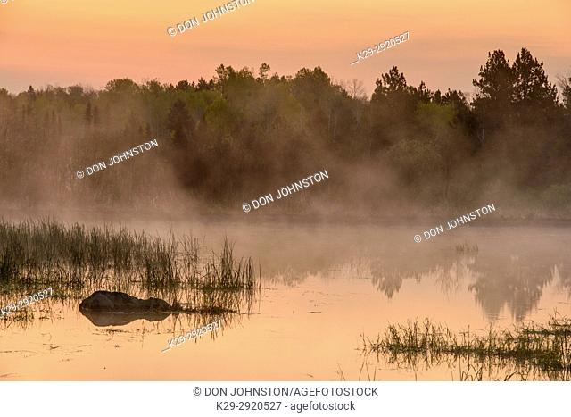 A beaver pond in spring at dawn, Greater Sudbury, Ontario, Canada