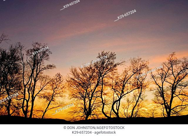Tree silhouettes and sunset skies in Cades Cove. Appalachian, Great Smoky Mountains National Park, Tennessee, USA