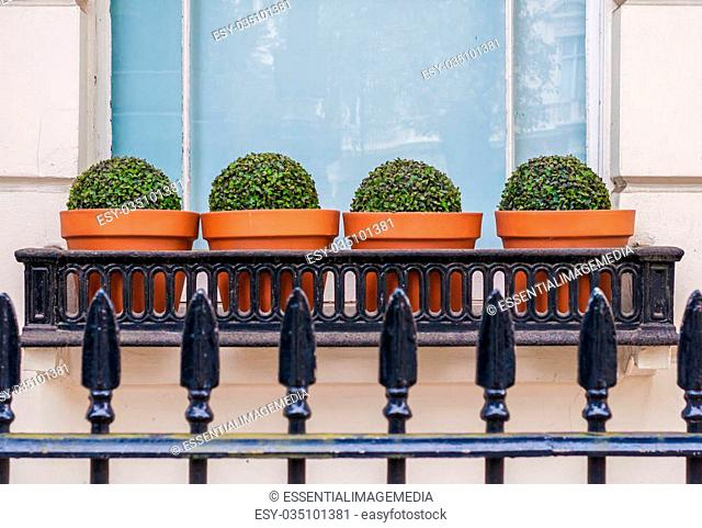 Townhouse Window Box containing 4 Privet Pots