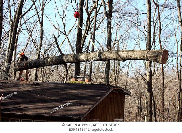 worker in orange hard hat preparing for crane to remove large piece of fallen tree from roof of house, winter forest, Indiana