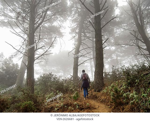 Hiking Foggy Day, Sierra de Mijas forest, Malaga province Costa del Sol. Andalusia southern Spain