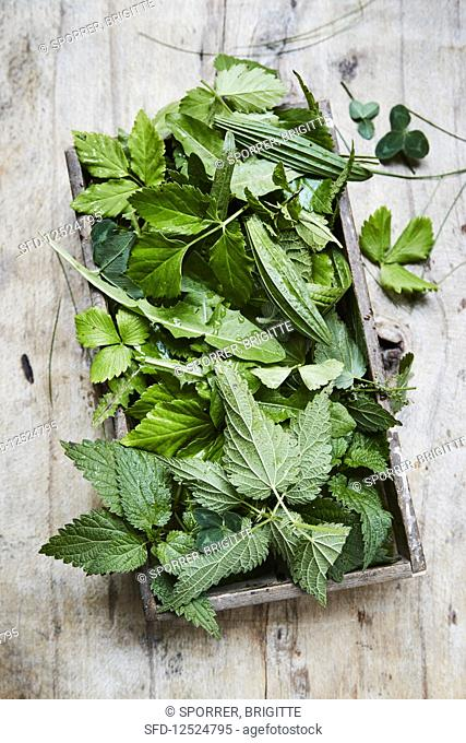 Various fresh wild herbs on a wooden tray