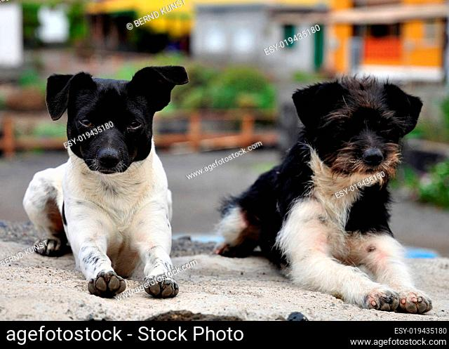 Zwei Junghunde beim Abhängen