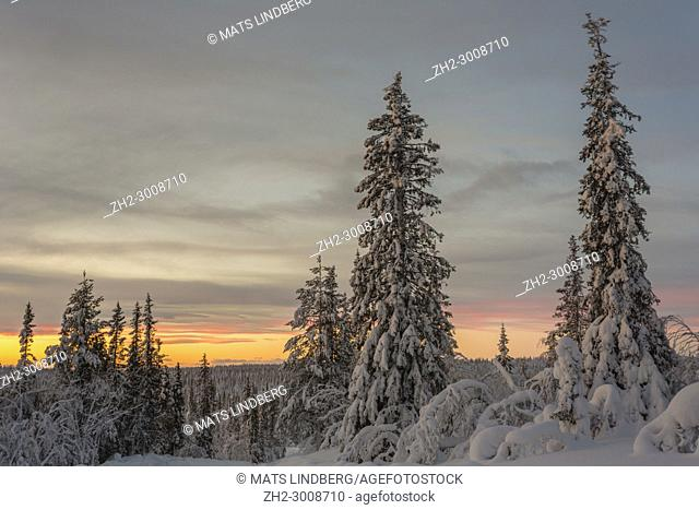 Winter landscape in sunset with nice colors in the sky, snowy trees, Gällivare, Swedish Lapland, Sweden