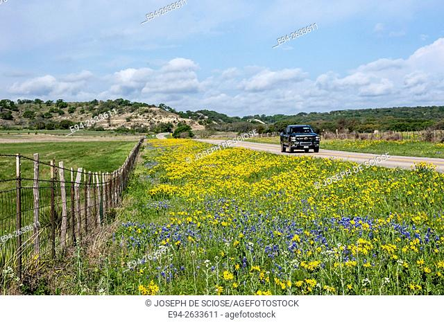 A roadside view of spring wildflowers with a 2 lane road and a fence fading into the distance