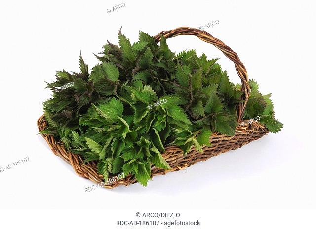 Basket with Nettle leaves, Urtica dioica