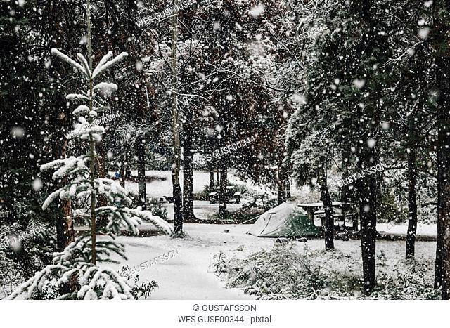 Canada, British Columbia, Jasper National Park, Icefields Parkway, Wapiti Campground in winter