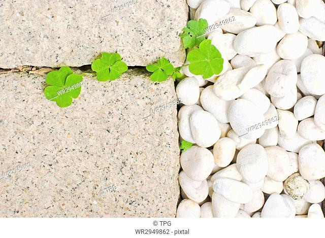 white pebble with green leaf in garden