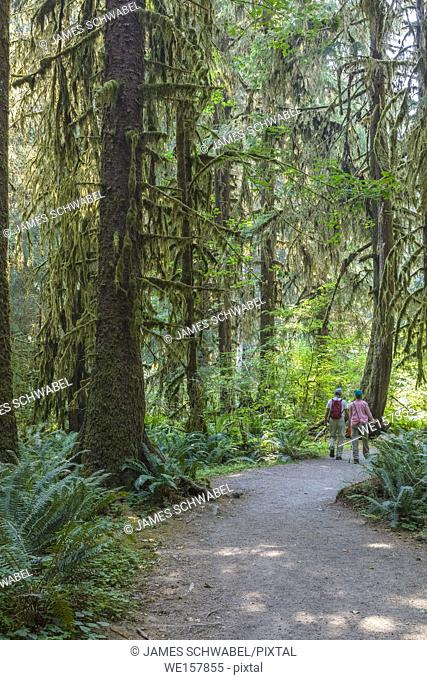 Hall of Mosses Trail in the Hoh Rain Forest iin Olypmic National Park in Washington State in the United States