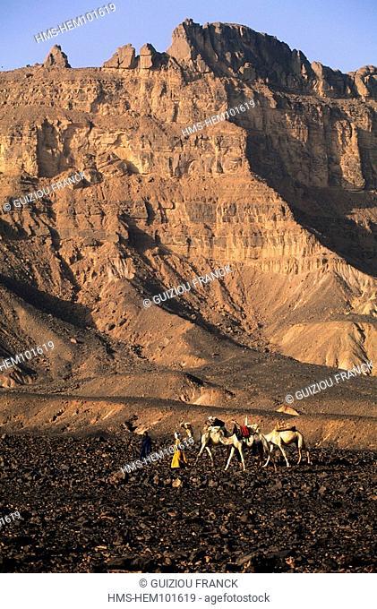 Libya, the Sahara, camel hiking on the volcanic plateau at the bottom of the Akakus massif