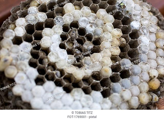 Close up of a wasp nest