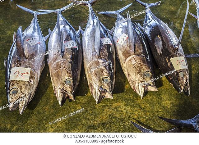 Kumano Kodo pilgrimage route. Fish market. Tuna fish. Fishing port. Katsuura. Nakahechi route. Wakayama Prefecture. Kii Peninsula. Kansai region