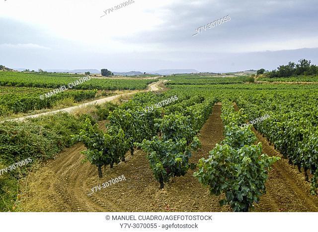 Vineyards. Navaridas. Rioja Alavesa, Alava, Basque Country, Spain