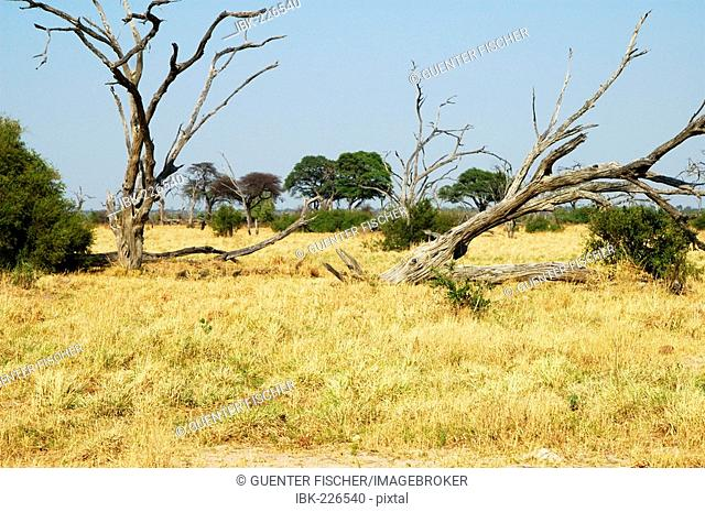 Savannah Savuti Game Reserve Botswana