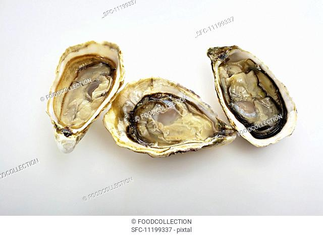 Three Gillardeau oysters on a white surface