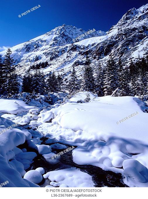 Poland. Tatra mountains. Dolina Roztoki. Roztoki Valley
