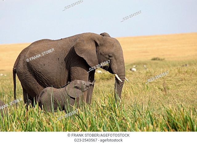 Elephant and baby elephant. Maasai Mara National Reserve, Kenya