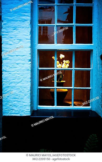 Flower in a window in Vlaeykensgang, Antwerp, Belgium