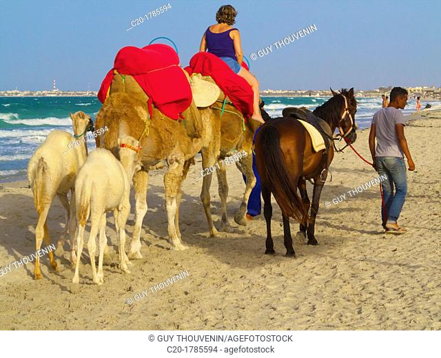 Tourist riding camels with horse, on the beach, Djerba, Tunisia